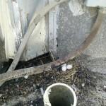 Several Pigeon Eggs